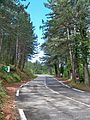 Route Ventoux côté Malaucène.jpg