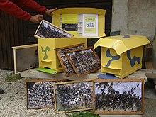 apiculture � wikip233dia