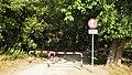 Rumianek - Park (1) - (Q33092699).jpg