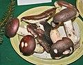 Russula cyanoxanha 1.jpg