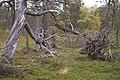 Sádis (Satis) - KMB - 16000300032192.jpg