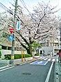 Sakura, Shin-Tokorozawa kindergarten.jpg