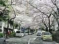 Sakura trees -04.jpg