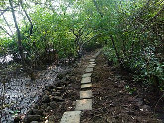 Salim Ali Bird Sanctuary - Paved walkway inside the sanctuary