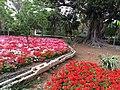 San Anton Attard Gardens 05.jpg