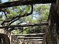 San Antonio, Texas (2018) - 021.jpg