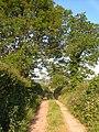 Sandgate Lane, Wiggaton - geograph.org.uk - 181750.jpg