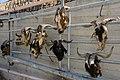 Schinaria Goat Heads 01.JPG