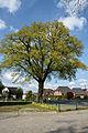 Schleswig-Holstein, Heist, Naturdenkmal 32-01 NIK 3076.JPG