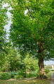 Schlosspark Leonhard 2291 Mercator 6.jpg