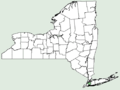 Scolymus hispanicus NY-dist-map.png