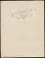 Serranus salmonoides - 1798-1876 - Print - Iconographia Zoologica - Special Collections University of Amsterdam - UBA01 IZ12900209.tif