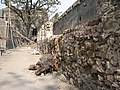 Sewri fort wall.jpg