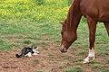 Shamus and Friend (7104383897).jpg
