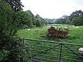 Sheep grazing by Holvert Lane - geograph.org.uk - 500211.jpg