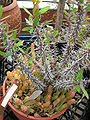 Shoreline CC hothouse succulents 04.jpg