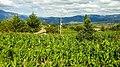 Siembras de maíz en Vallicopampa.jpg