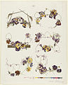 Six Groups of Pansies in Decorative Arrangement by Boston Public Library.jpg