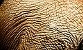 Skin Texture (2503800124).jpg