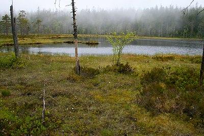 Myrarna vid Tärnättvattnen