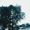 Sky View V.jpg
