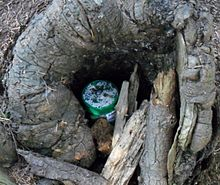 Fun Date Ideas #4: Typical hiding place for a geocache.