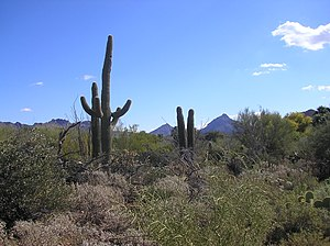 Sonoran Desert - The Sonoran Desert near Tucson, Arizona during winter.