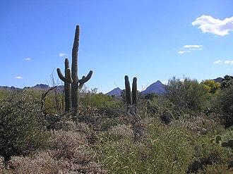 Sonoran Desert - The Sonoran Desert near Tucson, Arizona during winter.
