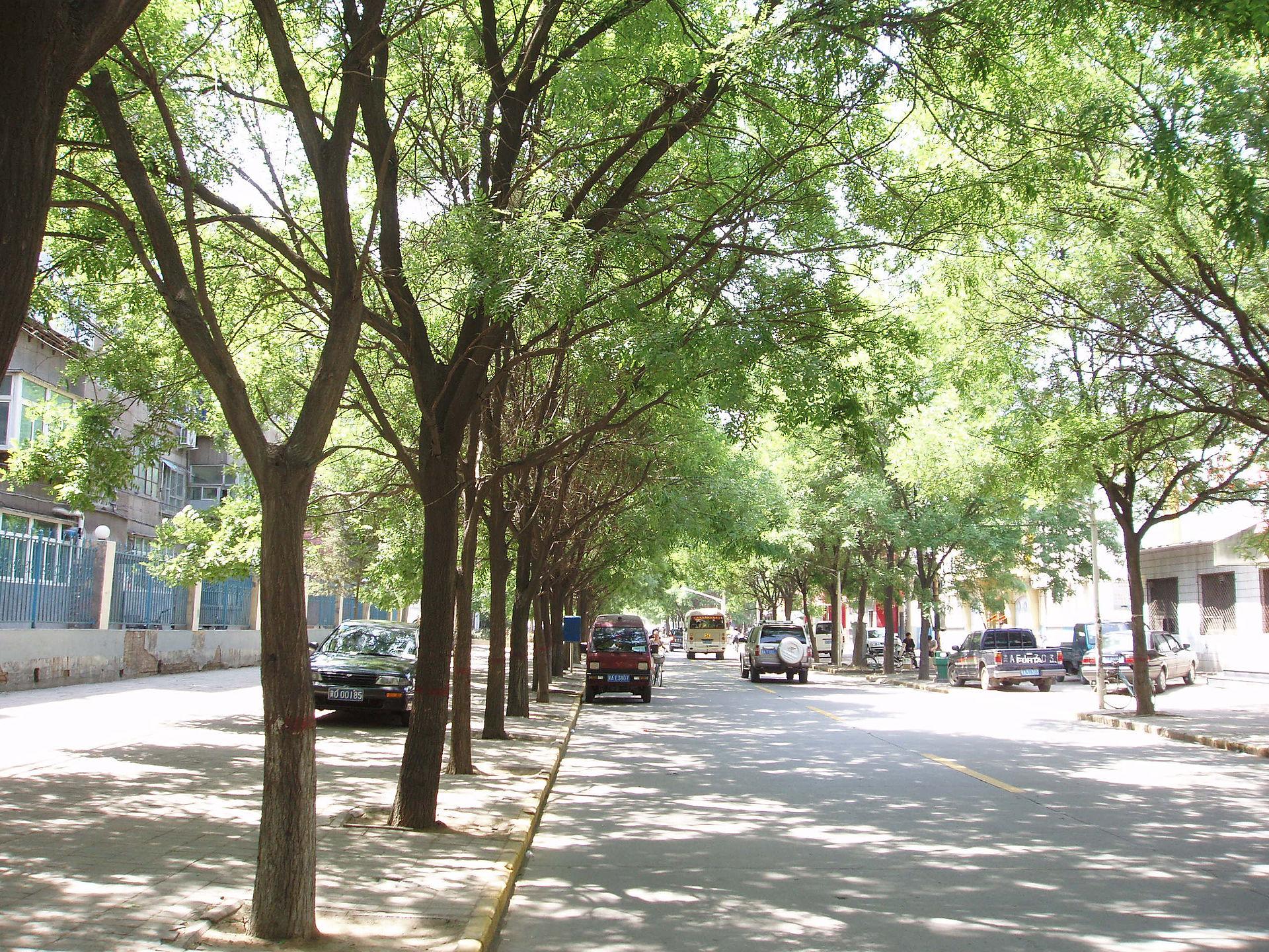 In regent street - 5 8