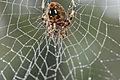 Spider - Andrea Westmoreland (2).jpg