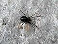 Spider 2 (BG) (5635196004).jpg