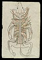 Spinal column of a Horse Wellcome L0035203.jpg