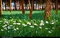 Spring (13026815355).jpg