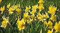 Spring in botanic garden - Cluj-Napoca (3439595224).jpg