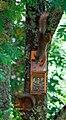 Squirrels at play (4695510957).jpg