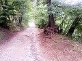 Squrrel on the path.jpg