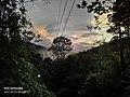 Sripada sun set throgh the forest.jpg