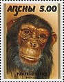 Stamp of Abkhazia - 2000 - Colnect 1004759 - Pan troglodytes.jpeg
