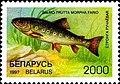 Stamp of Belarus - 1997 - Colnect 278753 - Brown Trout Salmo trutta morpha fario.jpeg