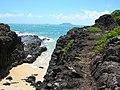 Starr-050419-6520-Panicum fauriei var carteri-habitat-Mokolii-Oahu (24450690370).jpg