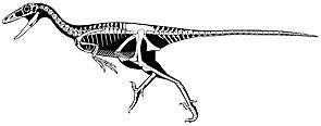 Skelettrekonstruktion von Troodon