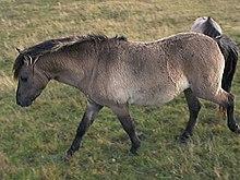 Le Cheval à l'état sauvage dans CHEVAL 220px-Steppentarpan