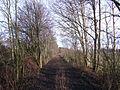 Streckenabschnitt Coesfeld–Rheine bei Lutum 2012-01-24 CLP 03.jpg
