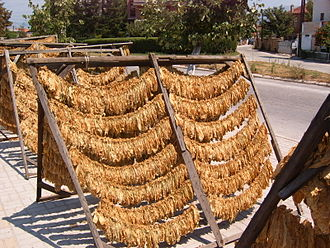 Turkish tobacco - Drying of tobacco on the streets of Prilep, Macedonia