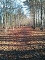 Sun forest bandon.jpg