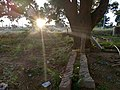 Sun rays 2.jpg