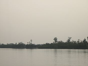 Sundarban , delta , forest 01.jpg