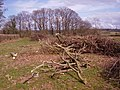 Supply of firewood - geograph.org.uk - 739032.jpg