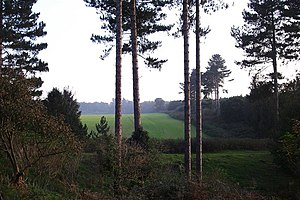 Reported UFO sightings in the United Kingdom - Rendlesham Forest site of UFO landing