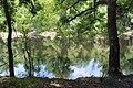 Suwannee River State Park river 1.jpg